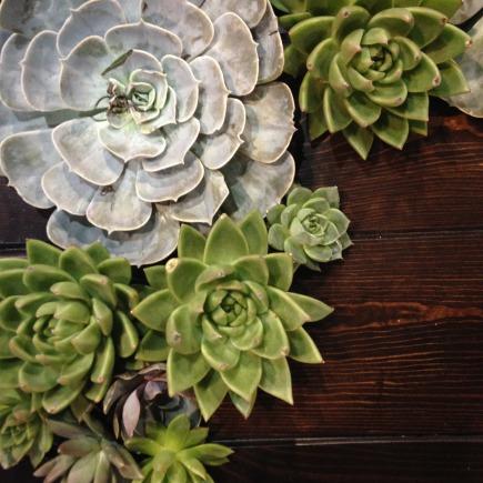 IHG Expo succulents